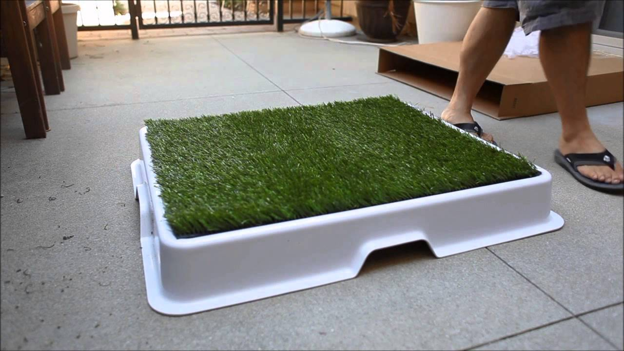 Dog Pee Area In Backyard :  Potty  The best designed dog potty for the urban dog owner  YouTube
