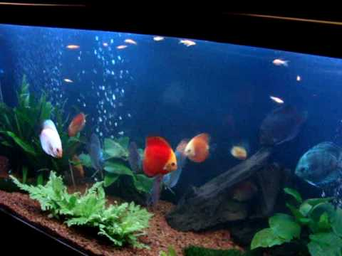 Discus Fish Tank Plants Images