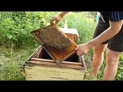 Как сажать пчел в новый улей 24