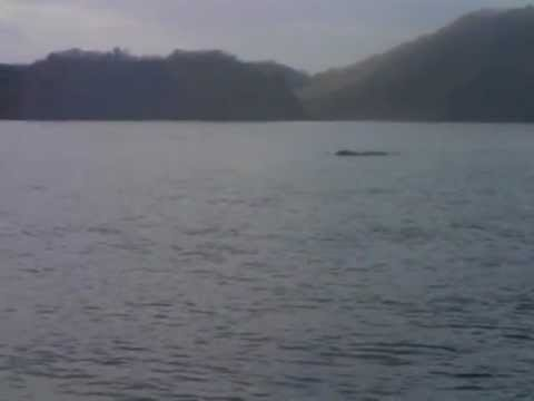 Costa Rica, Whale video, Papagayo fishing trip