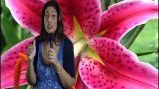 North Node in Aries or 1st House Astrology Series by Nadiya Shah