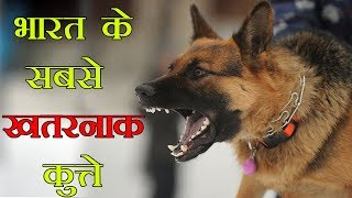 Top 10 Most Dangerous Indian Dogs