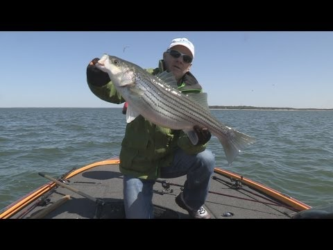 Bonus Video 2013 Episode #8 - Lake Texoma, Oklahoma Striper Fishing