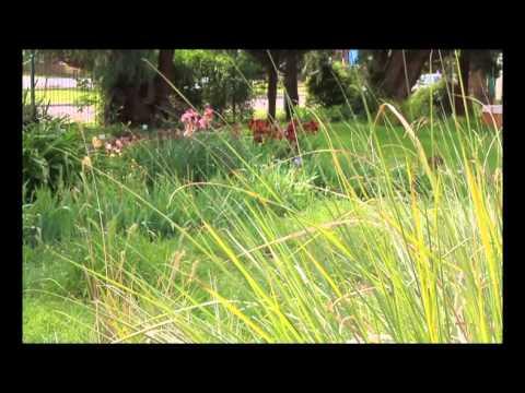 Jardines Botánicos, oasis en la ciudades