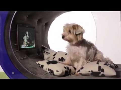 Samsung trình diễn nhà công nghệ cao... cho chó