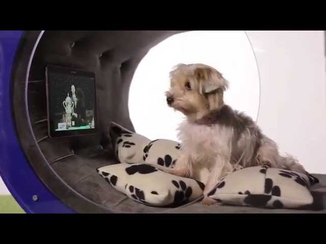 Crufts 2015- Samsung Dream Doghouse