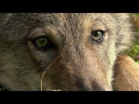 Документальный фильм Сезон охоты волков