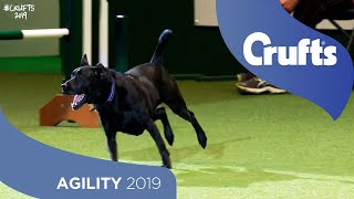 We Got a Runner! Rescue Dog Agility | Crufts 2019