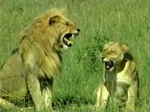 Chroniques de l'Afrique sauvage - Mères courage
