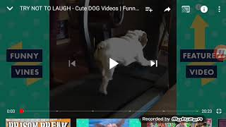 Try not to laugh cute and funny dogs