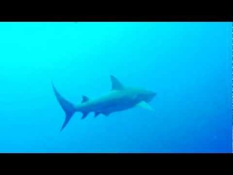 Bullenhaie - Ponta Du Ouro.mp4