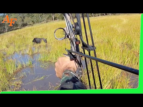 Pig Hunt 2012 June Gulf Country Australia Wild Boars - Andy Thomsen Rod Collings video