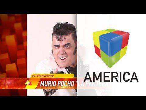 MURIÓ POCHO LA PANTERA