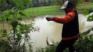Đi săn cá chép ao hoang gặp ngay con rô phi khủng
