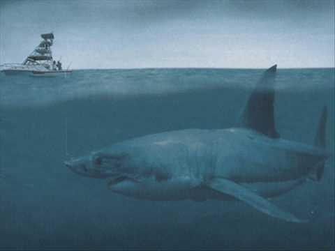 Huge Megalodons Is It REAL?? Video
