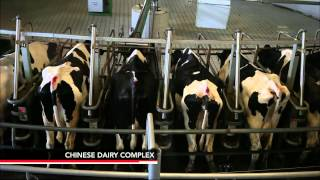 Could a Surplus of California Milk Fulfill Chinas Needs?