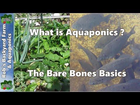What Is Aquaponics, The Bare Bones Basics..