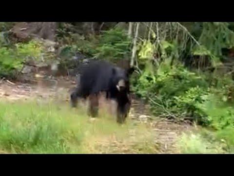 Jogger Has Scary Close Encounter With a Bear