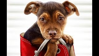 A Dog's Way Home Trailer Song (Aloe Blacc - Wake Me Up)