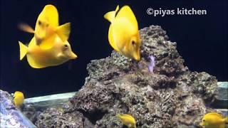 S.E.A Aquarium - Singapore