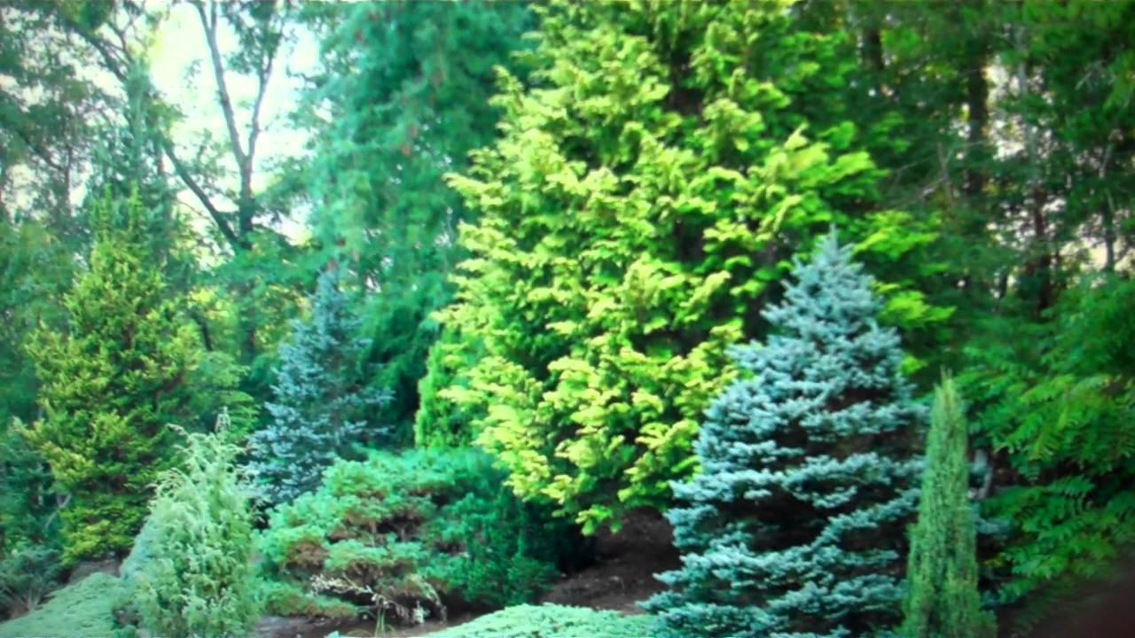 Evergreen trees for sale cheap from tn wholesale for Cheap trees
