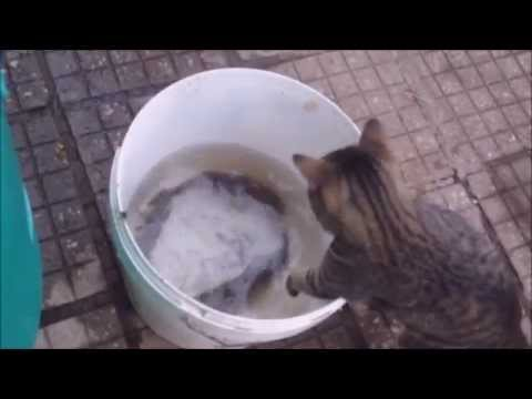 [Cat/fish] Video