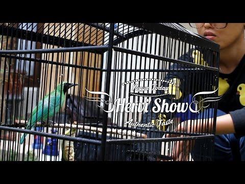 Dunia Hobi : Hervi Show Part 2 - Mandi Bareng Cucak Ijo Gacor video