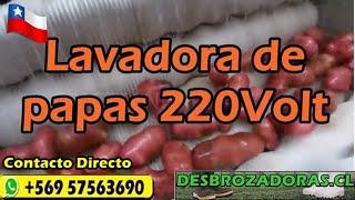lavadora de papas y zanahorias- Stgo de Chile