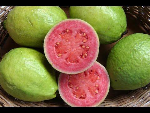 Top 10 healthy reasons to eat guavas this season!