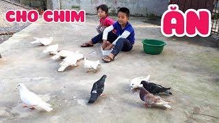 Bé kem cho chim bồ câu ăn