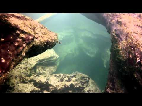 Blue Spring State Park, FL - Fishy Situation: A Day Away - GoPro Hero2