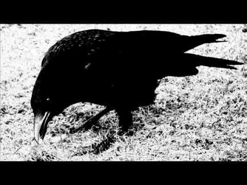 Mustan Kuun Lapset - Laulu Mustan Variksen