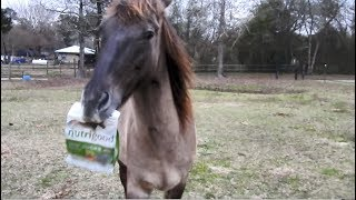 Horse brings his own treats