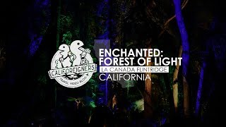 Things to do in California | Enchanted: Forest of Light