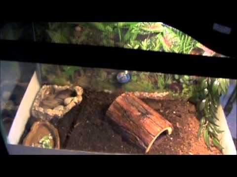 Baby Box Turtle Care - YouTube