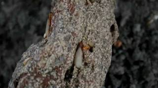Inspecting trees for termites.wmv