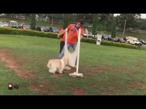 My Dog In a Dog Show? In Abuja? {Part 1}