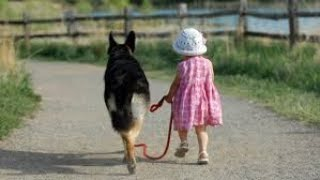 Amazing Funny Cute Dogs Playing With Girl #39