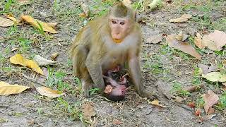 So Hard Situation Of Baby Duke After Falling Down from Top Of Tree, Very Bad & Break Heart