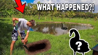 Something Happened to My Pet Swan in the POND!!!