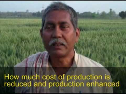 Interview with progressive farmer - Bihar, India