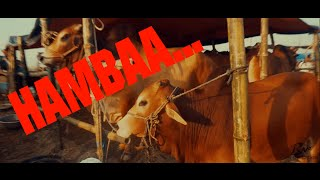 HAMBAA SONG | EID-UL-ADHA | KURBANI NEW SONG 2016