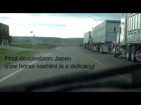 Meat Trade: Live Horse Transport from Canada to Japan