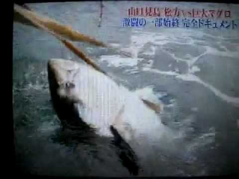 Giant Million Dollar Tuna-Tonno 325Kg Music Videos