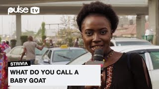 What Do You Call A Baby Goat? | Pulse TV Strivia