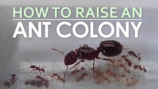 How To Raise An Ant Colony