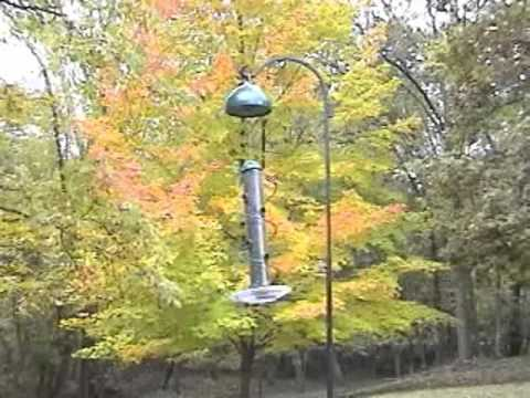 Swirl-A-Squirrel Video