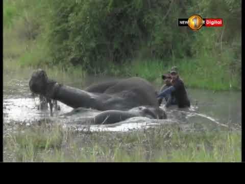wild elephant sustai|eng