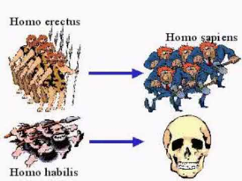 Homo habilis; Homo erectus; Allopatric Speciation