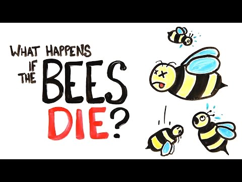 What Happens If The Bees Die?